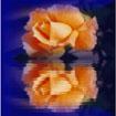 Postal de flores 2 flores11.jpg