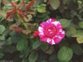 Postal de flores 2 flores18.jpg
