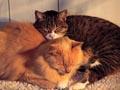 Postal de gatos gato10.jpg