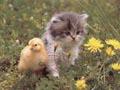 Postal de gatos gato11.jpg