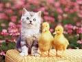 Postal de gatos gato12.jpg