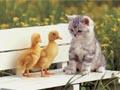 Postal de gatos gato13.jpg