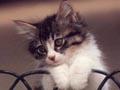 Postal de gatos gato14.jpg