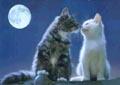 Postal de gatos gato2.jpg