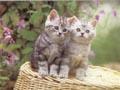 Postal de gatos gato3.jpg