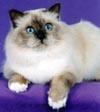 Postal de gatos gato4.jpg