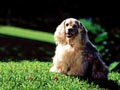 Postal de perros perro1.jpg
