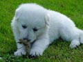 Postal de perros perro10.jpg