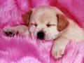 Postal de perros perro11.jpg