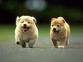Postal de perros perro12.jpg