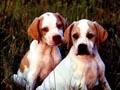 Postal de perros perro13.jpg