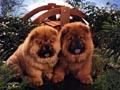 Postal de perros perro14.jpg