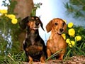 Postal de perros perro15.jpg