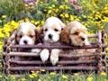 Postal de perros perro2.jpg