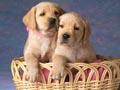Postal de perros perro3.jpg