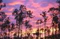 Postal de paisajes naturales 2 paisaje22.jpg