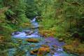 Postal de paisajes naturales 3 paisaje3.jpg